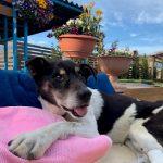 老犬ホーム九十九里パークに…千葉から中型MIXの男の子のダイくん(16さい)が入園しました。編