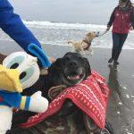 2019年も海さんぽ~九十九里海岸に、思い出とあしあと一緒にのこそうね!(中型犬・大型犬)その4編