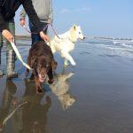 2019年も海さんぽ~九十九里海岸に、思い出とあしあと一緒にのこそうね!(中型犬・大型犬)その5編