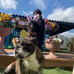 可愛いうさ耳ワンちゃん達と一緒に~3月はHAPPYイースター!(小型犬)その3編