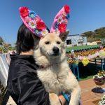 可愛いうさ耳ワンちゃん達と一緒に~3月はHAPPYイースター!(中型犬・大型犬)その1編