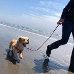 令和元年もみんなで一緒に~九十九里海岸の海さんぽへ行ってらっしゃ~い!(小型犬・中型犬)その6編