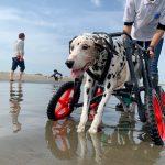 令和元年もみんなで一緒に~九十九里海岸の海さんぽへ行ってらっしゃ~い!(小型犬とエスくん)その1編