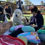 老犬ホーム九十九里パークがテレビ「TBSのNスタ」で紹介されました。編