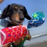 令和元年もみんなで一緒に~九十九里海岸の海さんぽへ行ってらっしゃ~い!(小型犬・中型犬)その10編
