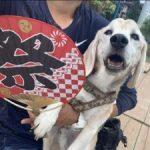ドックランの笹の葉サラサラ~7月は七夕まつりだよ!(小型犬・中型犬)その7編