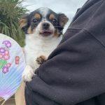 ドックランの笹の葉サラサラ~7月は七夕まつりだよ!(小型犬・中型犬)その1編
