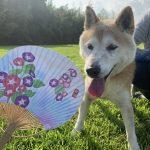 ドックランの笹の葉サラサラ~7月は七夕まつりだよ!(中型犬・小型犬)その3編
