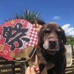 ドックランの笹の葉サラサラ~7月は七夕まつりだよ!(中型犬・小型犬)その5編