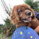 ドックランの笹の葉サラサラ~7月は七夕まつりだよ!(中型犬・小型犬)その1編