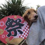 ドックランの笹の葉サラサラ~7月は七夕まつりだよ!(小型犬・中型犬)その4編