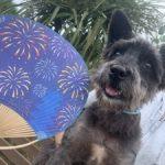 ドックランの笹の葉サラサラ~7月は七夕まつりだよ!(小型犬・中型犬)その6編