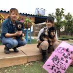 ドックランの笹の葉サラサラ~7月は七夕まつりだよ!(小型犬・中型犬)その3編