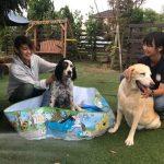 8月の海風ふくよ公園で…みんなで涼しく夏遊び。(中型犬・大型犬)その5編