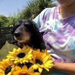 8月の海風ふくよ公園で…みんなで涼しく夏遊び。(小型犬・中型犬)その3編