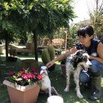 8月の海風ふくよ公園で…みんなで涼しく夏遊び。(小型犬・中型犬)その5編