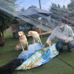 8月の海風ふくよ公園で…みんなで涼しく夏遊び。(小型犬・中型犬)その7編