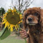 8月の海風ふくよ公園で…みんなで涼しく夏遊び。(中型犬・大型犬)その1編