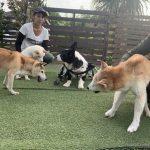 8月の海風ふくよ公園で…みんなで涼しく夏遊び。(中型犬・大型犬)その3編