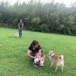 8月の海風ふくよ公園で…みんなで涼しく夏遊び。(中型犬・大型犬)その4編