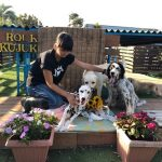 8月の海風ふくよ公園で…みんなで涼しく夏遊び。(中型犬・大型犬)その6編