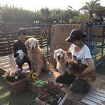 8月の海風ふくよ公園で…みんなで涼しく夏遊び。(中型犬・大型犬)その7編