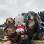 季節はもう秋ですね九十九里パーク秋コレクションはじまめま~す!(小型犬・中型犬)その6編