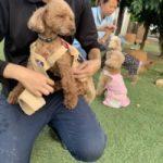 季節はもう秋ですね九十九里パーク秋コレクションはじまめま~す!(小型犬・中型犬)その2編