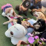 季節はもう秋ですね九十九里パーク秋コレクションはじまめま~す!(中型犬・大型犬)その5編