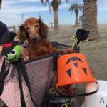 10月は~秋の海さんぽでHAPPYハロウィ~ン!(小型犬・中型犬)その5編