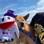 10月は~秋の海さんぽでHAPPYハロウィ~ン!(小型犬・中型犬)その4編