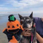 10月は~秋の海さんぽでHAPPYハロウィ~ン!(小型犬・中型犬)その6編