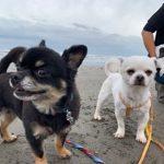 10月は~秋の海さんぽでHAPPYハロウィ~ン!(小型犬・中型犬)その1編