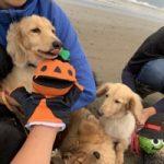 10月は~秋の海さんぽでHAPPYハロウィ~ン!(小型犬・中型犬)その3編