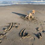 老犬ホーム九十九里パークに…埼玉からMIX犬の男の子「きいくん」(15歳)が入園しました。編