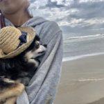 老犬ホーム九十九里パークに…神奈川からチワワの男の子「ボビーくん」(14歳)が入園しました。編