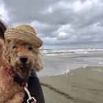 老犬ホーム九十九里パークに…千葉からトイプードルの男の子「チビくん」(11歳)が入園しました。編