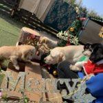 九十九里パークから~11月のワンワンMerry Christmas♪(小型犬・中型犬)その2編