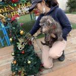 九十九里パークから~11月のワンワンMerry Christmas♪(小型犬・中型犬)その3編