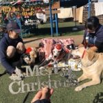 九十九里パークから~11月のワンワンMerry Christmas♪(中型犬・大型犬)その4編
