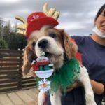 九十九里パークから~11月のワンワンMerry Christmas♪(小型犬・中型犬)その7編