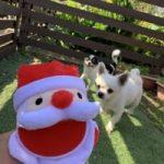 九十九里パークから~11月のワンワンMerry Christmas♪(小型犬・中型犬)その1編