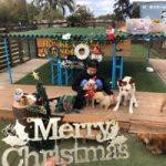 九十九里パークから~11月のワンワンMerry Christmas♪(小型犬・中型犬)その5編
