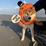 10月は~秋の海さんぽでHAPPYハロウィ~ン!(中型犬・大型犬)その2編