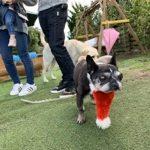 九十九里パークのワンちゃん達の12月(中型犬・大型犬)その4編