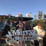 九十九里パークから~11月のワンワンMerry Christmas♪(中型犬・大型犬)その1編