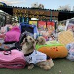 老犬ホーム九十九里パークのワンちゃん達へご寄付をたくさんいただきました。編
