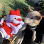 九十九里パークのワンちゃん達の12月(小型犬・中型犬)その2編