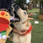 九十九里パークから~11月のワンワンMerry Christmas♪(中型犬・大型犬)その5編