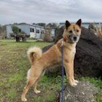 老犬ホーム九十九里パークに…千葉からMIX犬の女の子の「メメちゃん」(10歳)が入園しました。編